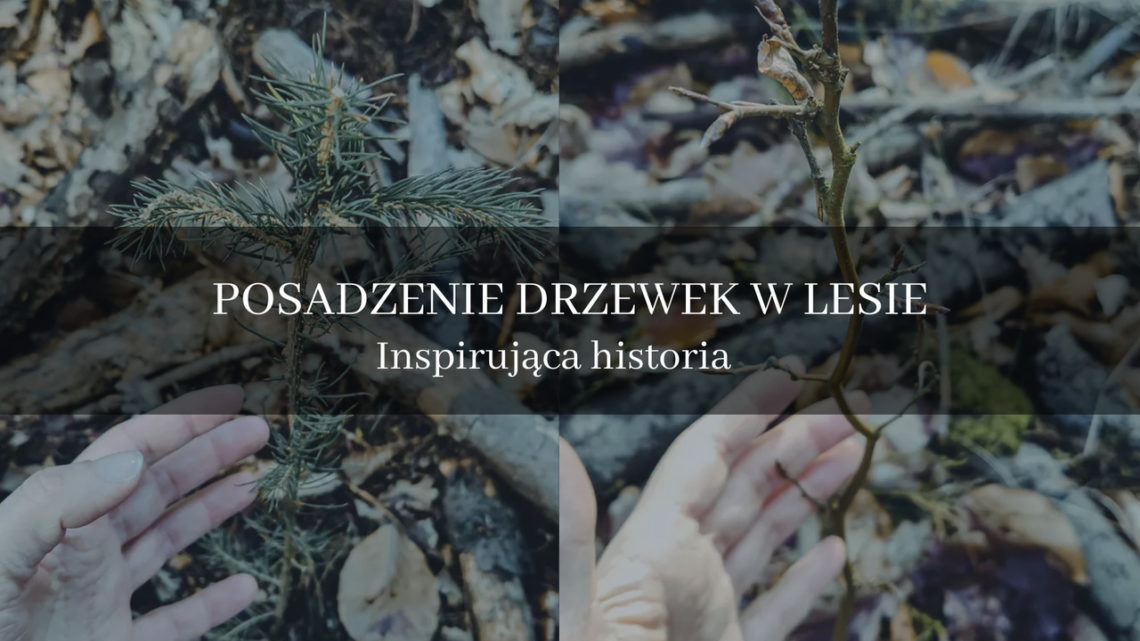 Drzewka: Pan Bukowski i Mikołaj